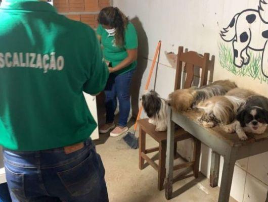 Pet shop é flagrado usando detergente para dar banho em cães e aplicando ivomec (Crédito: Assessoria - CRMV/MT)