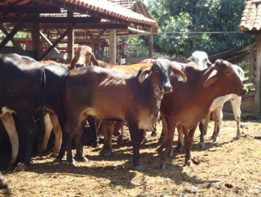 Sicredi Sul MT possui linhas de crédito que auxiliam produtores a manterem produtividade (Crédito: Ana Lucia Ferreira - Assessoria)