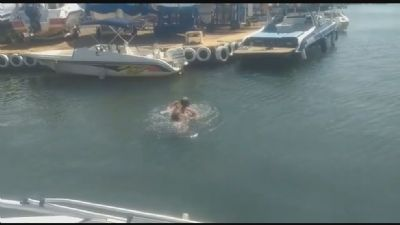 Homem é atacado por capivara e leva mordidas enquanto nadava em lago