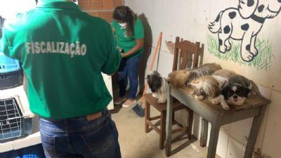 Pet shop é flagrado usando detergente para dar banho em cães e aplicando ivomec